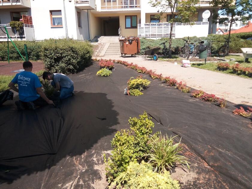 Pracownicy Toruńskiej firmy PW Kotwica, którzy układają roślinność w ogrodzie