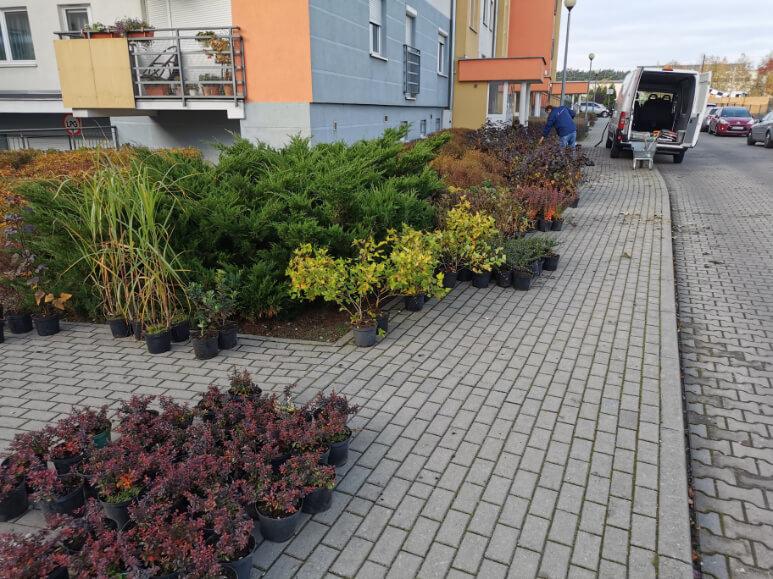 Układanie oraz sadzenie kwiatów i roślinności w ogrodach spółdzielczych oraz prywatnych